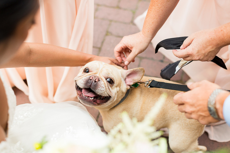 Frenchie, dog-friendly first look | Jessica Hunt Photography | Columbia, South Carolina
