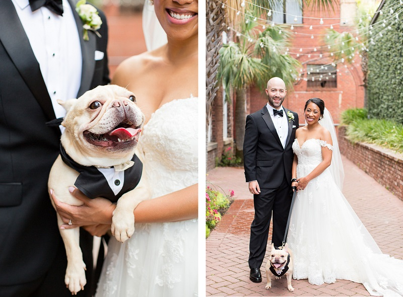 bride and groom and Frenchie, © Jessica Hunt Photography | dog-friendly wedding photography, Columbia, SC