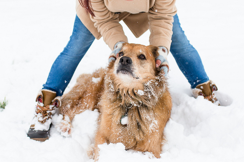Golden mixed breed dog lying in snow, woman with hands on dog's head, ©Megan Rei Photography | dog-friendly family portraits, Bealeton, VA