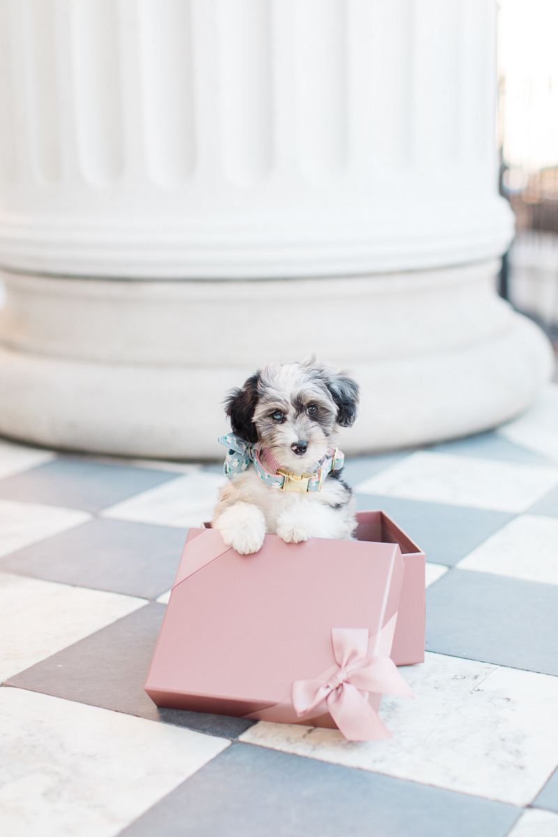 Puppy Love, adorable Aussiedoodle puppy in blush box with satin ribbon, ©Christa Rene Photography