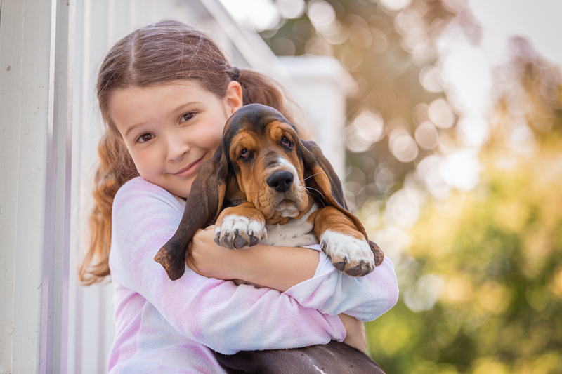 young girl with pig tails holding cute Bassett Hound puppy ©Terri J Photography