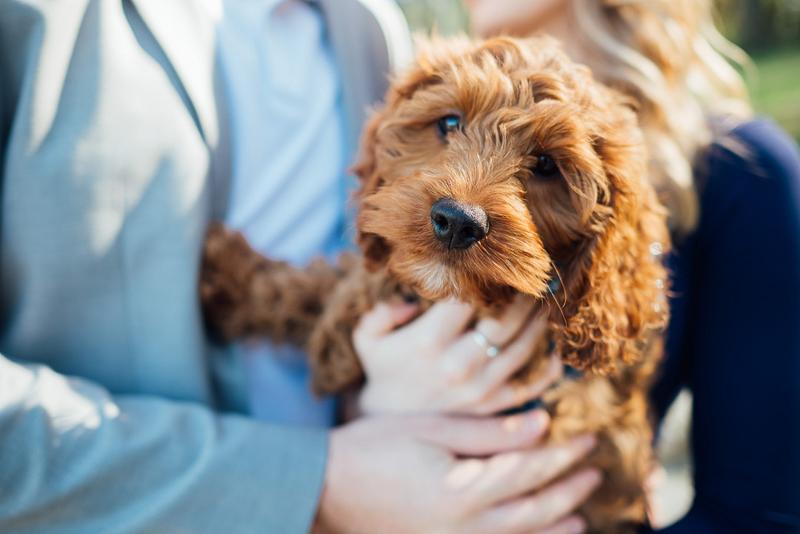 cute doodle puppy, ©Celladora Photography + Video