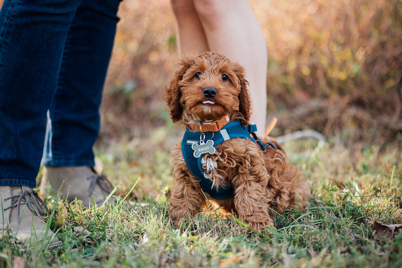 Engagement portraits with a puppy | ©Celladora Photography + Video