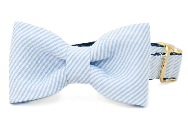 light blue seersucker bow tie collar for dogs