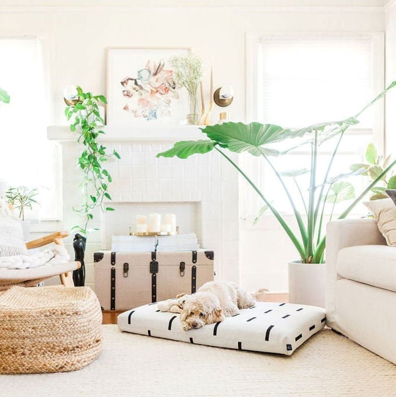 dog resting on beautiful modern dog bed, plant and dog friendly living room, Laylo pets