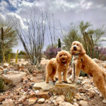 Paws Up | The Perfect Trick For Great Dog Photos