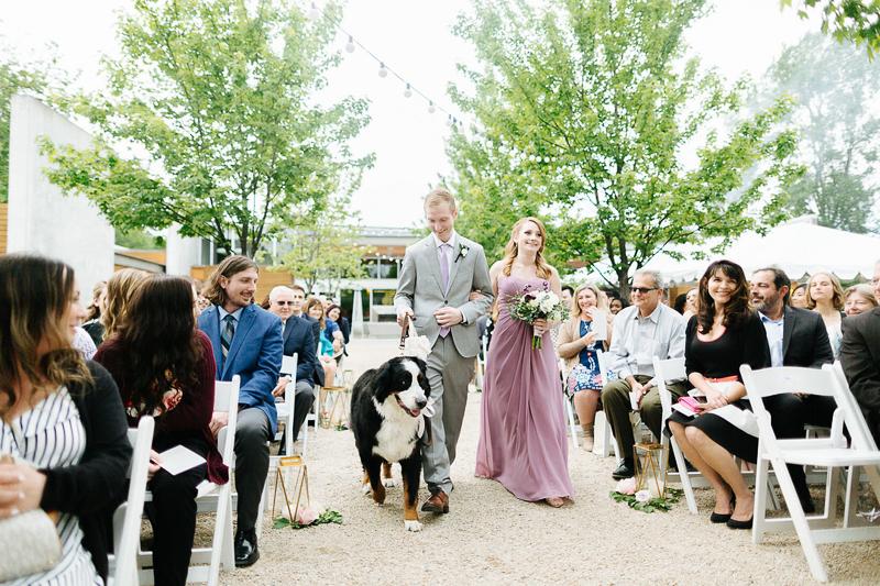 Bernese Mountain Dog, wedding dog walking down the aisle, Novelty Hill-Januik Winery, Woodinville, WA   ©J Tobiason Photography