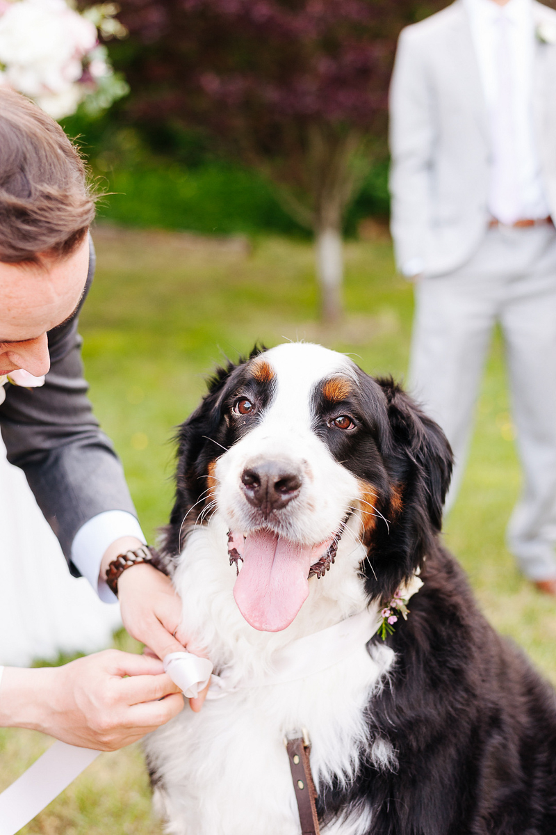 including dogs in wedding, BMD, ©J Tobiason Photography   Woodinville, WA