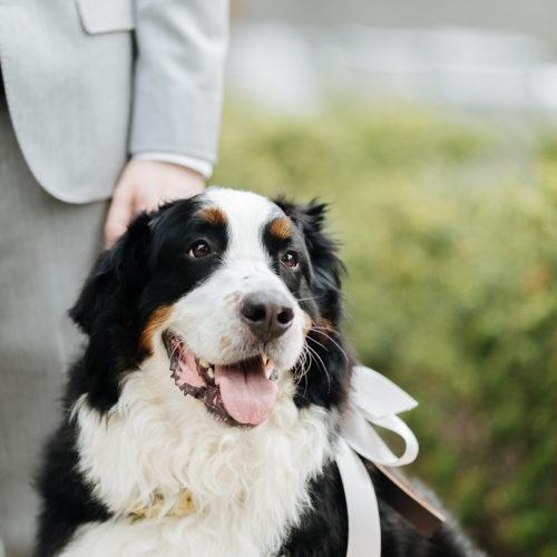 Best (Wedding) Dog:  Mosby | Woodinville, WA