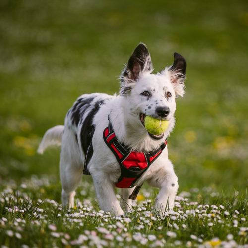 Puppy Love:  Arrow   Cathedral Park, Portland, Oregon