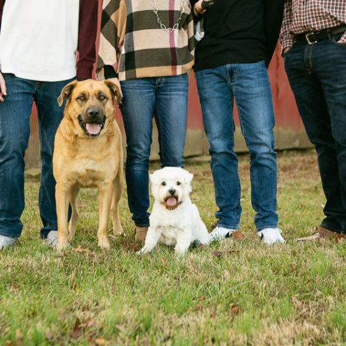 Happy Tails:  Dog-Friendly Family Photos | Daisy, MO