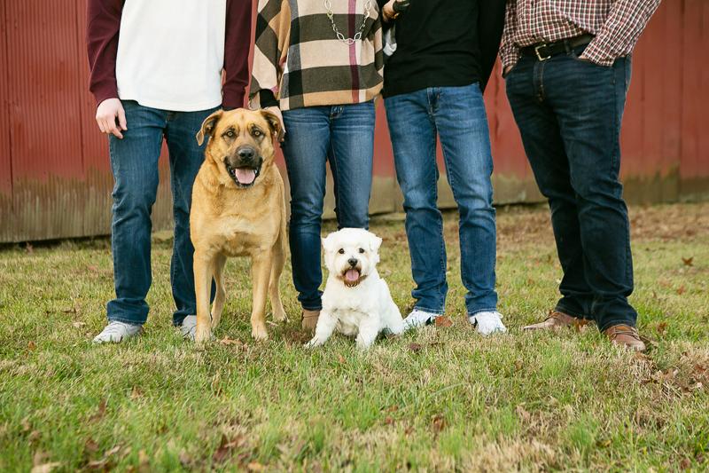 Mastiff mix, Westie, dog-friendly family portraits, Daisy, MO   ©Mandy Whitley Photography