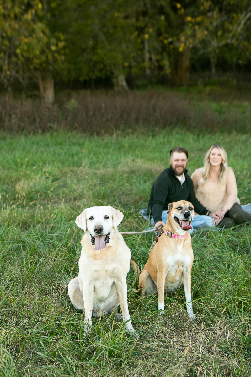 Yellow Lab and Black Cur mix, family portraits, College Grove, TN   ©Mandy Whitley Photography