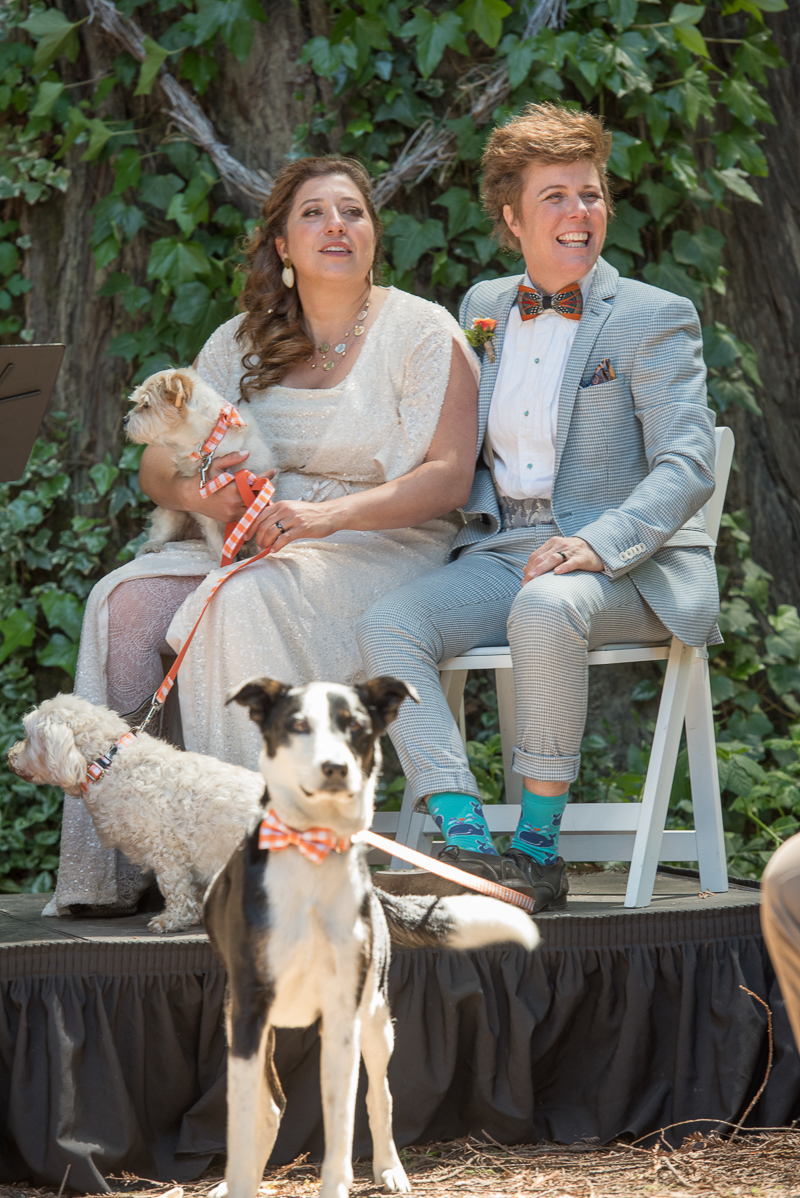 dog-friendly wedding, couple sitting in chairs and their dogs | Rustically Romantic Photography by Darby Johnson, Guerneville, CA