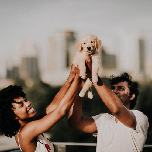 Puppy Love:  Simba the Golden Retriever | Atlanta, GA