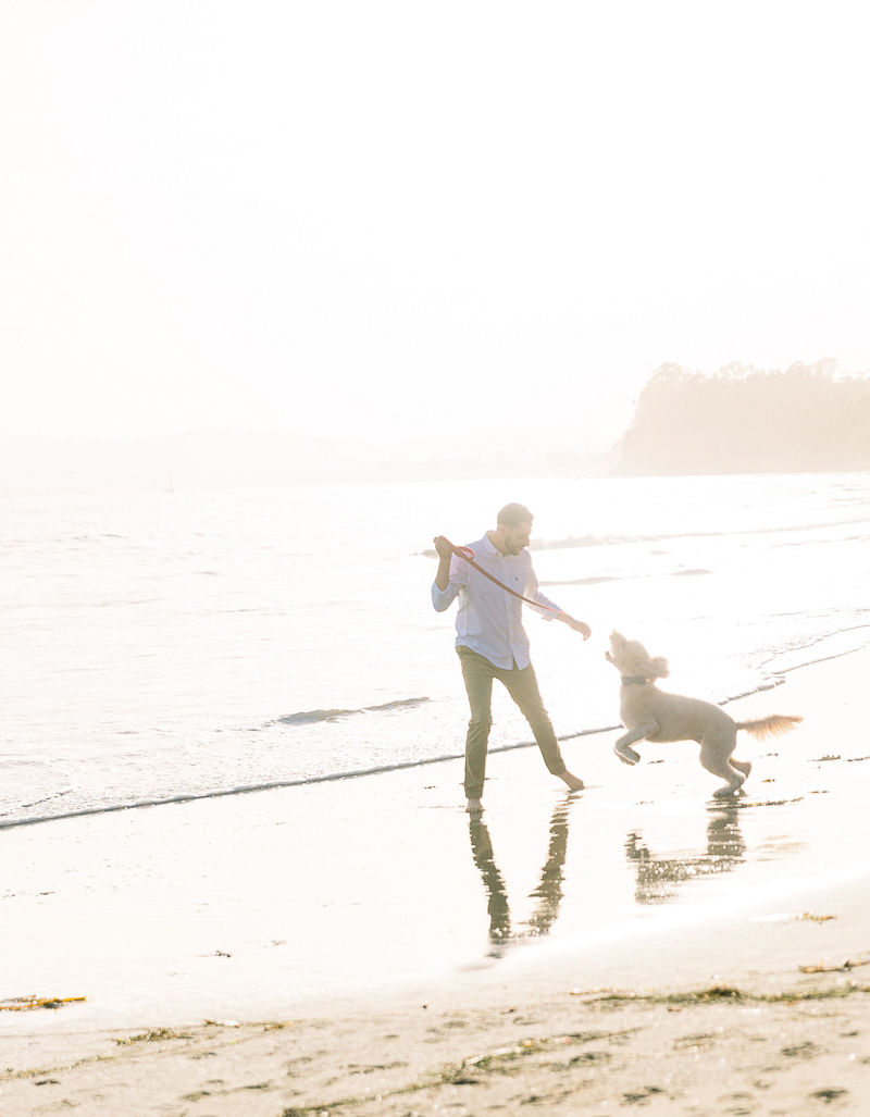 man playing with his Goldendoodle on Santa Barbara beach   © Fig + Willows Studio