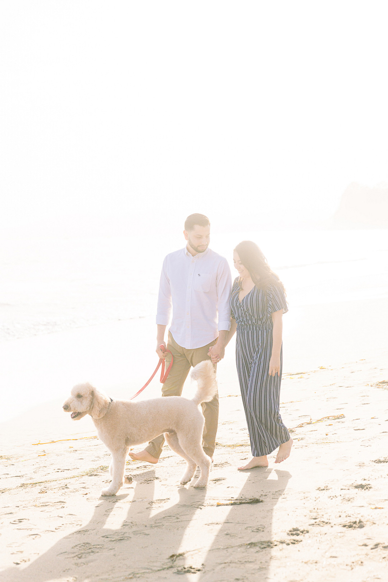 couple walking their dog on the beach while holding hands   © Fig + Willows Studio