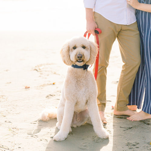 Dog-friendly Engagement Session | Butterfly Beach