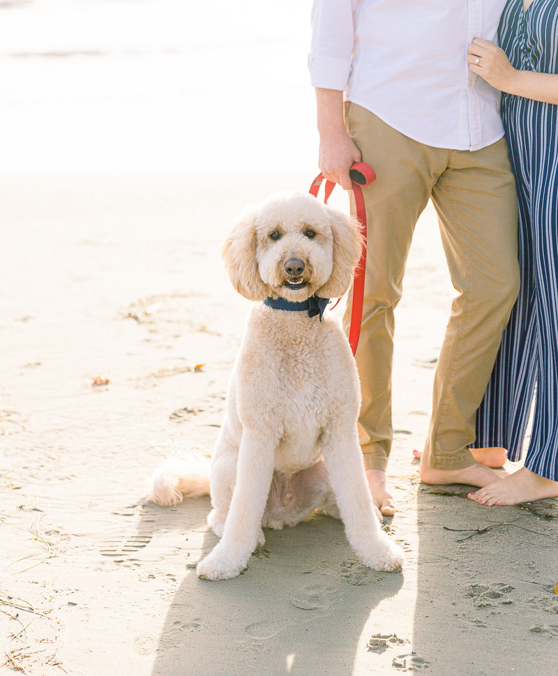 dog-friendly engagement session, dog on sand   © Fig + Willows Studio