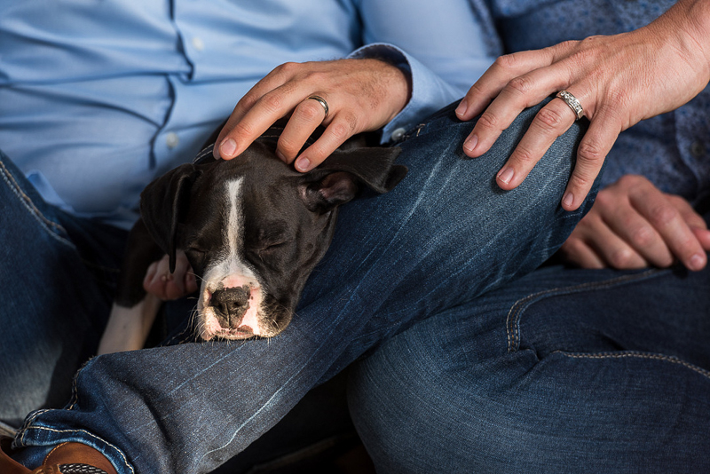 tired puppy sleeping in someone's lap, dog-friendly family portraits | ©Melonhead Photography, Montgomery, TX