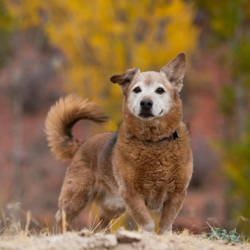 Adopt Me:  Best Friends Animal Sanctuary