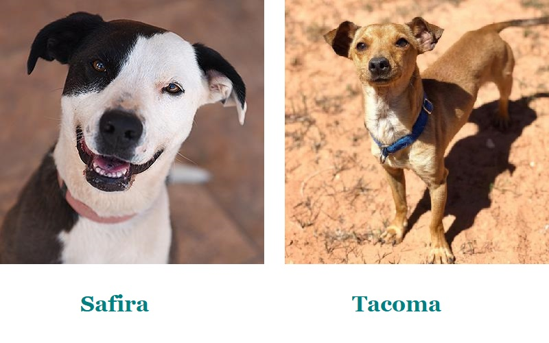 Border Collie mix, adopt a dog from Best Friends Animal Society