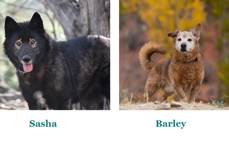 Adoptable dogs Best Friends Animal Sanctuary | Kanab, Utah