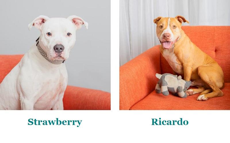 mixed breeds sitting on orange sofa | Best Friends Animal Society